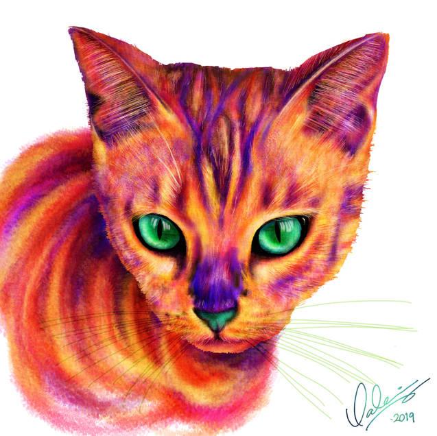 Dharma the Cat