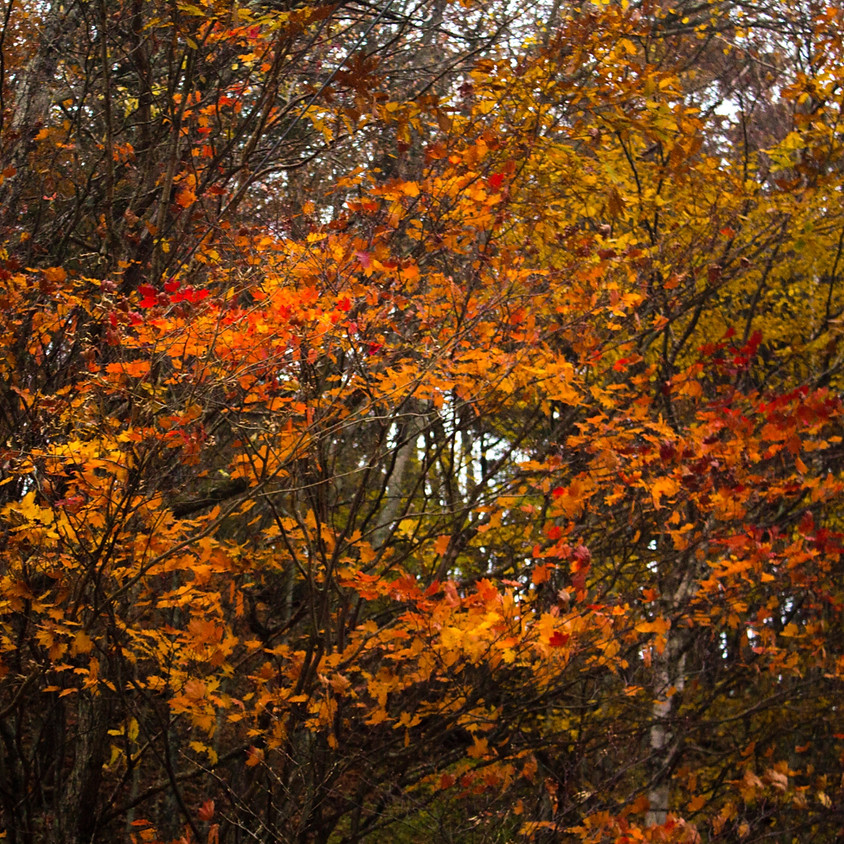 Creativity & Self-Care: Autumn Equinox Edition (Americas)