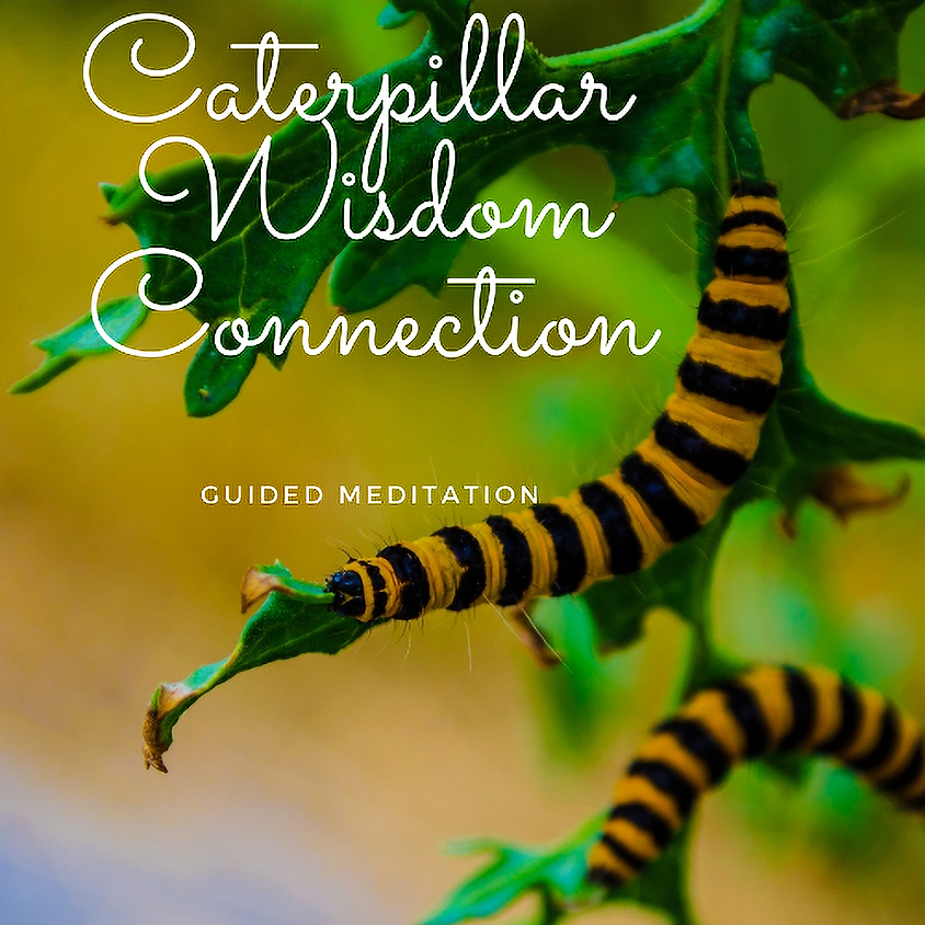 Guided Journeying Meditation for Caterpillar Wisdom Connection | Katherine Creuynni