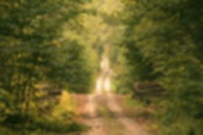 Wild Path_edited.jpg