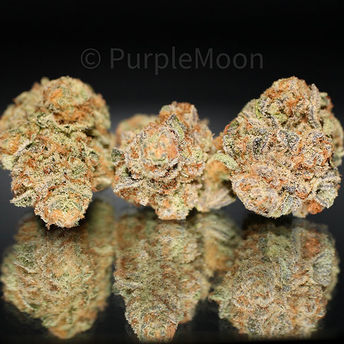 Blueberry Fuego