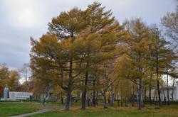 Осень в Николаевске