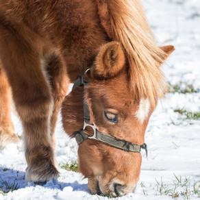 Affronter le froid : côté cheval