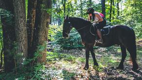 Prendre un cheval en demi-pension, en quart ou en tiers de pension