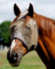 horse-2961340_1920.jpg