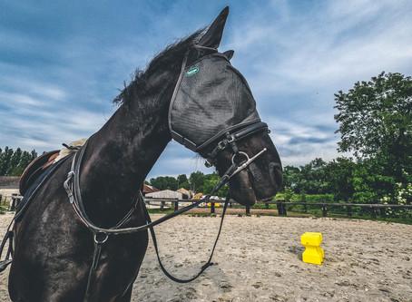 SunBlack a testé pour vous le masque anti-mouche (et anti UV) Emouchine by Ravene