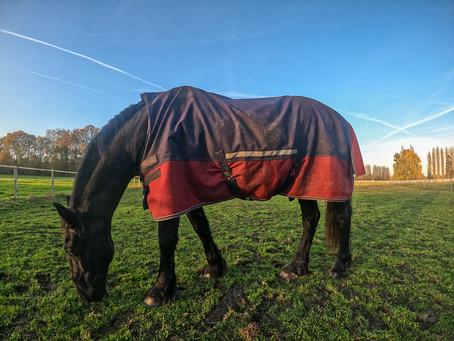 Résistance, imperméabilité, grammage,... comment choisir la couverture de son cheval pour l'hiver ?