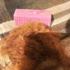 J'ai testé la brosse anti-poils showmaster