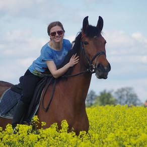 Mettre son cheval en demi-pension