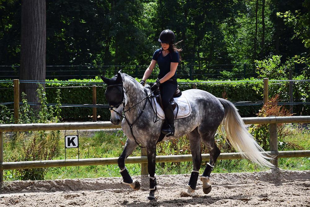 avis-tee-shirt-horse-pilot
