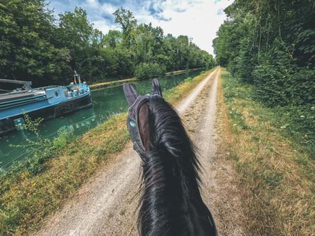 8 pistes de travail pour que ton cheval peureux / sur l'oeil passe partout en balade