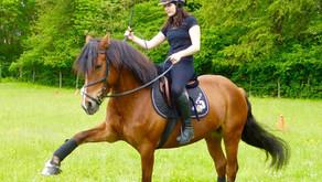 Comment apprendre la jambette à son cheval ?