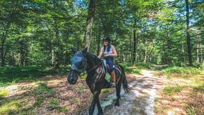 Astuce pour fixer une carte à la selle de ton cheval