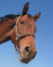 horse-473093_1920.jpg