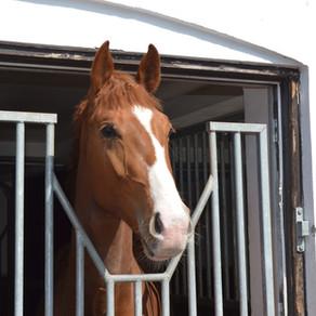 Comment bien installer son cheval au box ?
