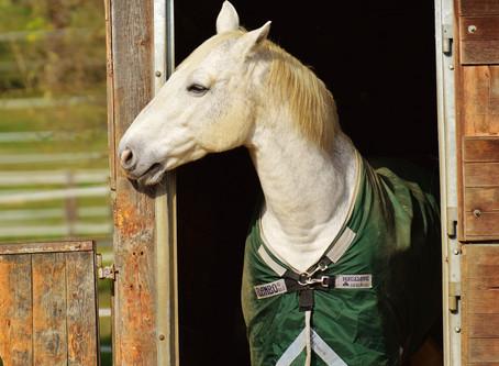 Bien choisir la couverture de son cheval pour l'hiver