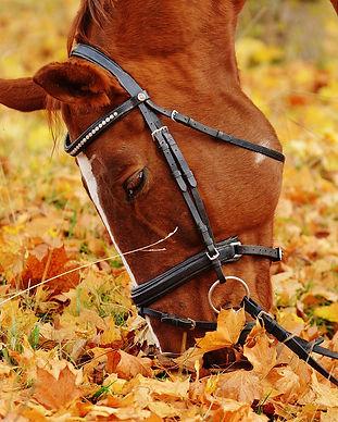horse-blog