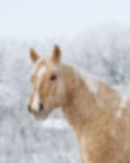 horse-3054682_1920.jpg