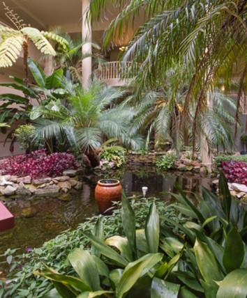 Mil Garden. Punga. HR.jpg