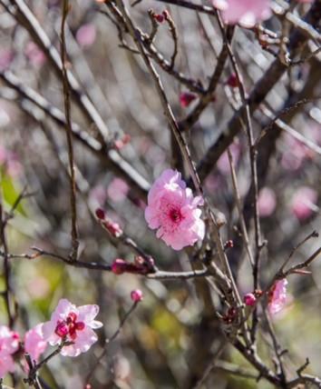 Pink Flowers HR.jpg