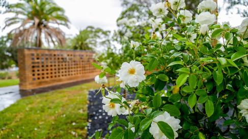 12-Harmony-Rose-Garden3.jpg