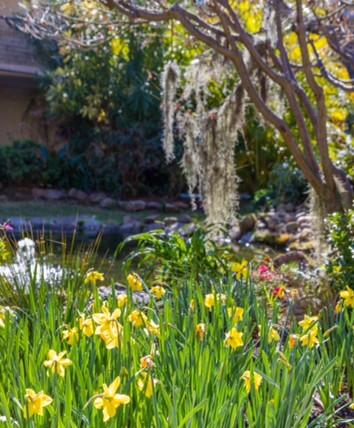 Daffodils HR.jpg