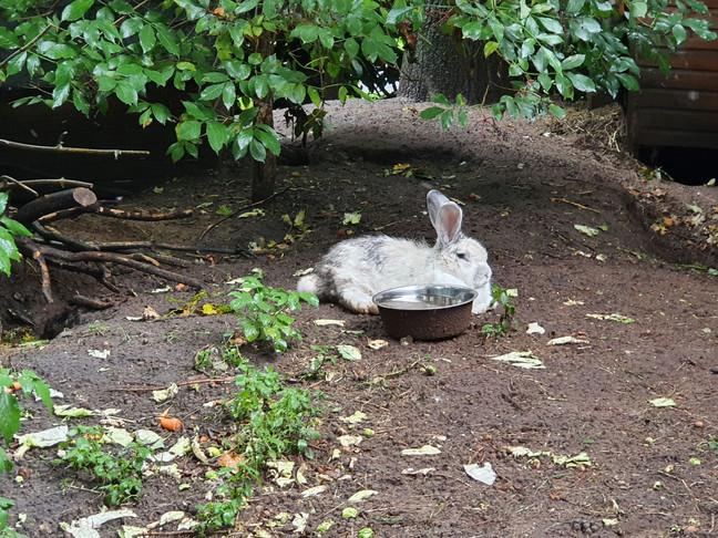 relaxt konijn