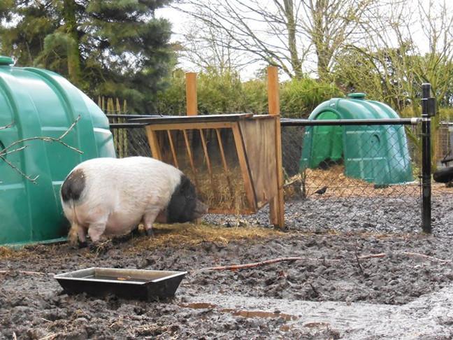 blubber in Piggypark