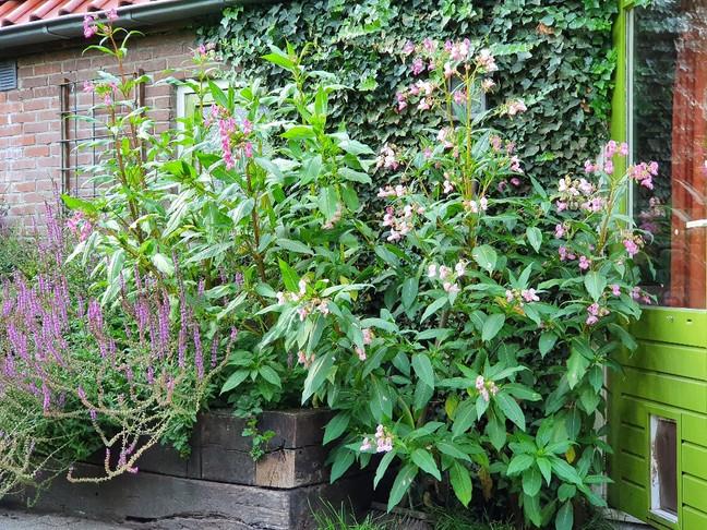 tuinieren met onkruid