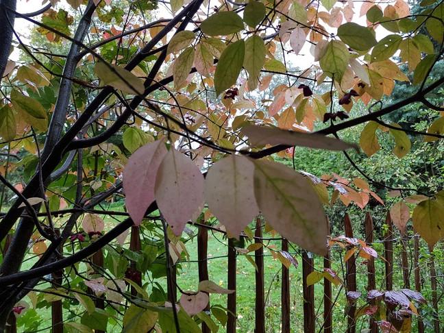 bezoek, opruiming en herfst