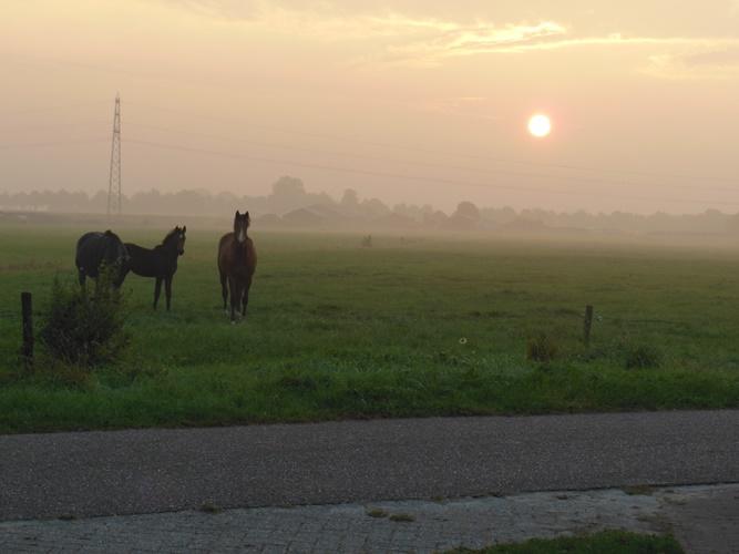 paarden in opgaande zon