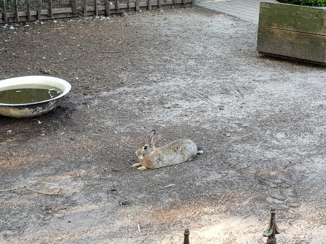 fastfood konijn