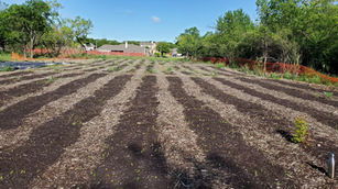 We helped recruit volunteers to tend to the production beds and pull weeds.