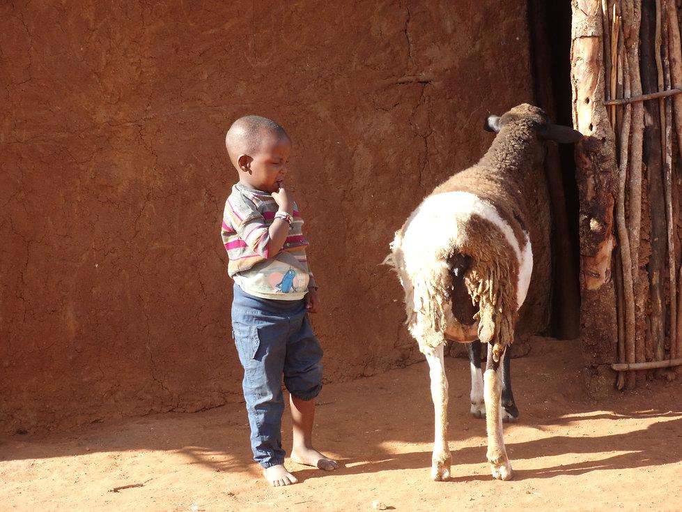 Little boy in Kitengela, Kenya, contemplates sheep