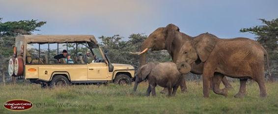jeep with elephants.jpg