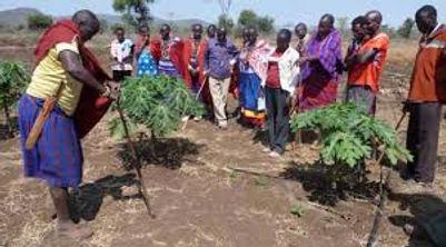 Maasai learn horticulture.jpg