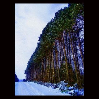 Wix Archive Tall Pine Road.jpg