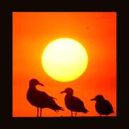 Fb Archive 3 Birds.jpg