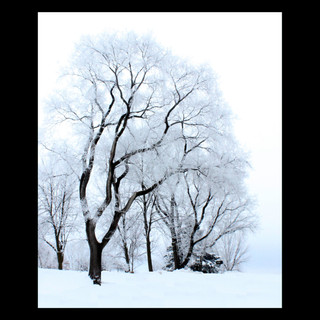 Wix Archive Frosted Veins.jpg