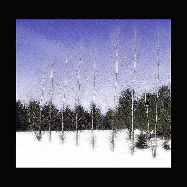 Wix Archive Tree Fence Desat.jpg