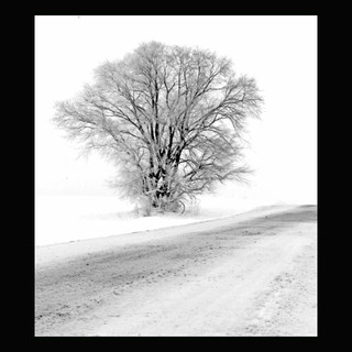 Wix Archive Lonely Tree.jpg