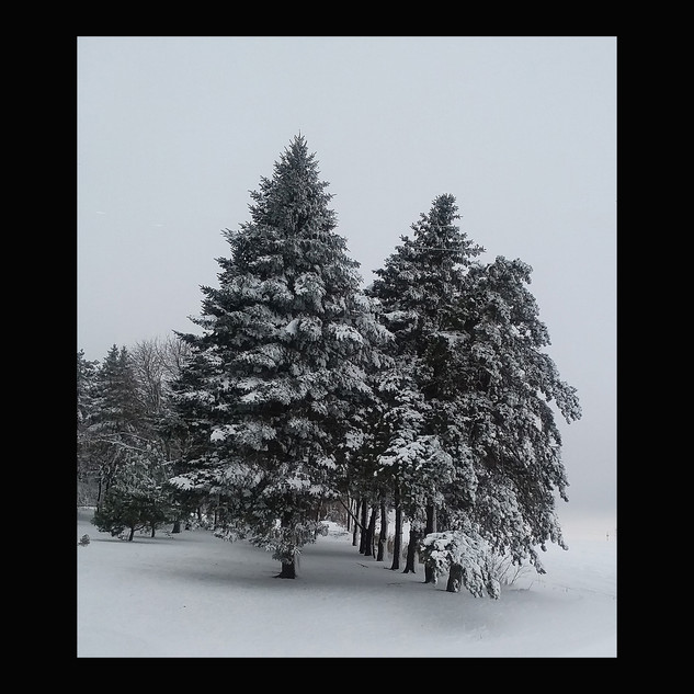 Wix Archive Trees Waiting F.jpg