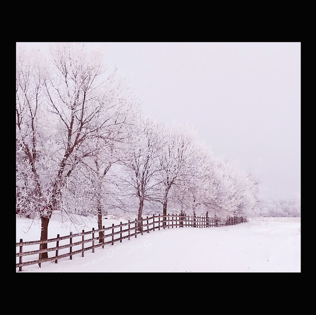 WixArchive SnowFenceeLight2020WixFin.jpg