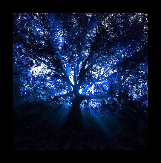 ZKDP Archive Witch Tree 2 WSMudge.jpg