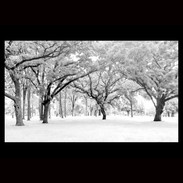 Wix Archive East Park Panorama.jpg