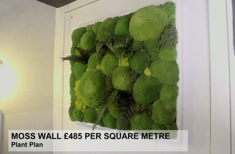 MOSS WALL £485 PER SQUARE METRE