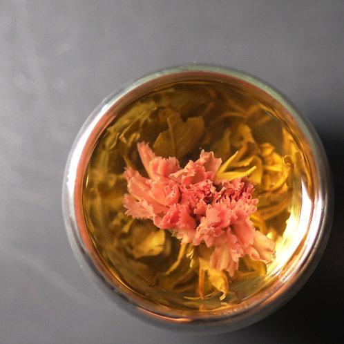 Carnation Blossoms