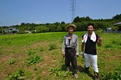 odaka kenji, blackstone sunflower field no go zone.JPG