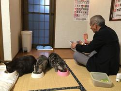 odaka kowata san with his cats.JPG