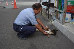 watari saito and dog .JPG